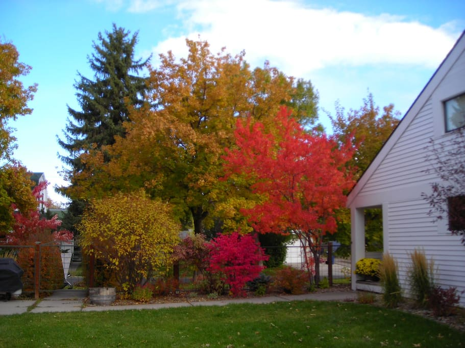 Back yard Fall color.