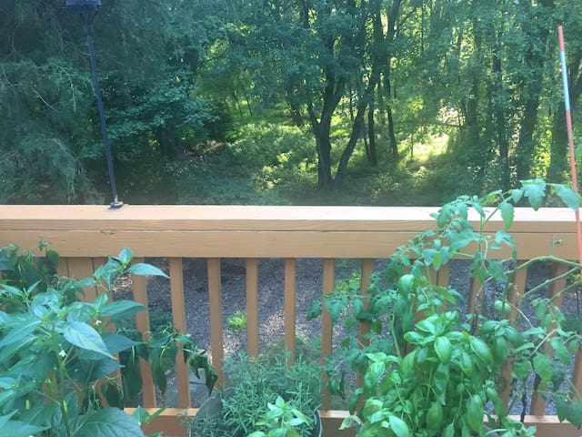 Wooded back of the house from deck