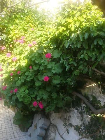 Quarto em apartamento com jardim