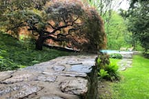Side pathway to the pool, with Japanese maple tree