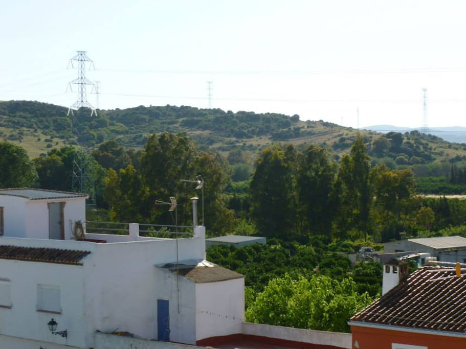 Local views from the terrace