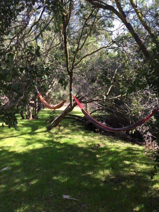 Bosque para descanso