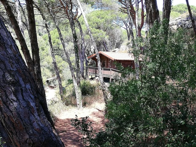 Hidden wood house in Cascais for nature lovers
