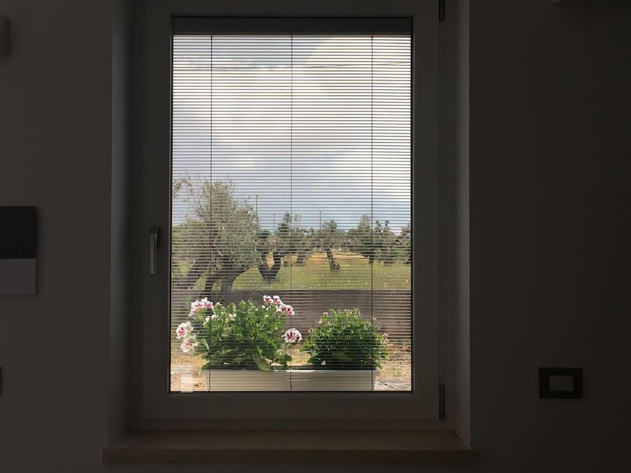 Tutti i vetri hanno veneziane oscuranti interno vetro.