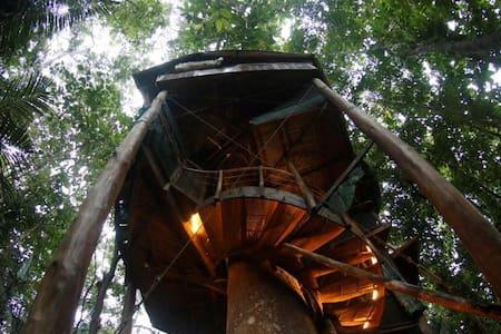 Healing Rainforest Tree House Rental near Beaches