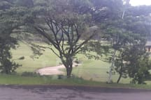 Taman Dayu View Golf