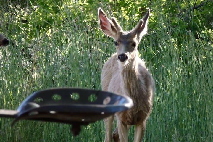 Deer.    Everywhere.