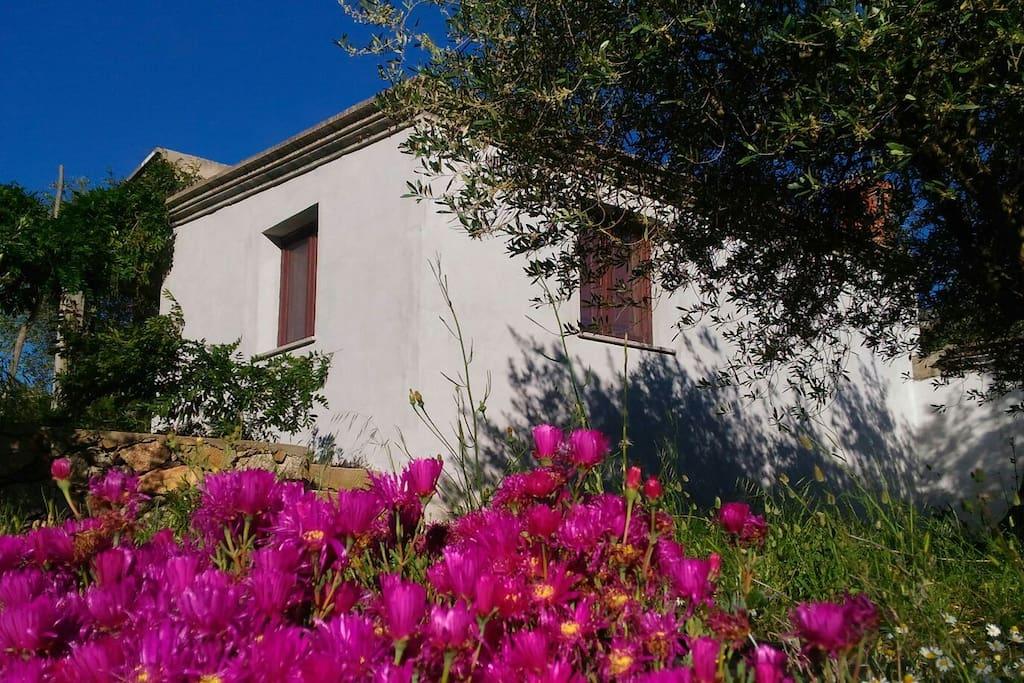 Casa s giardino