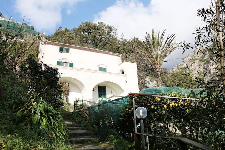 The Valley House