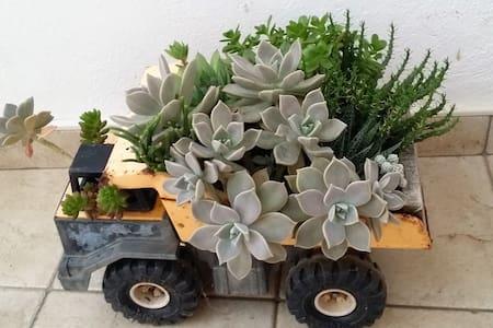 Studio Apartment Kaktus