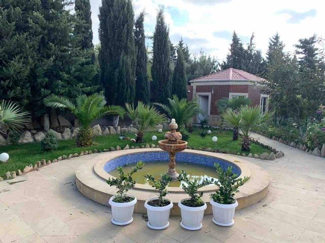 large yard with fountain and decorative tree  большой двор с фонтаном и декоративным деревом