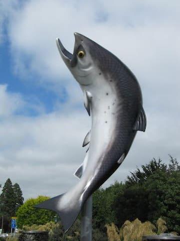Rakaia is the Salmon Fishing capital of New Zealand