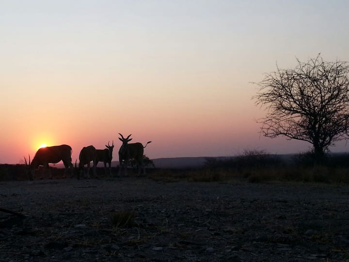 BaseCamp Namibia, Nature's Best CampSite, Outjo