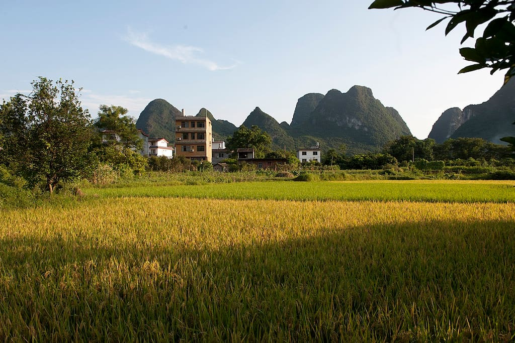 From our building straight into the rice paddies.