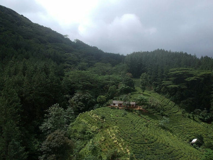 Forest Edge Home'Stay in Tea plantation.
