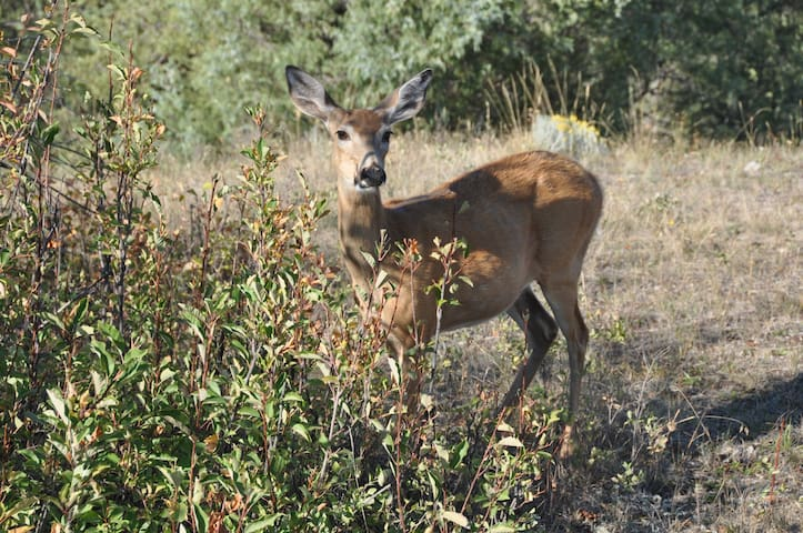 Whitetail and mule deer are frequent visitors to our site.