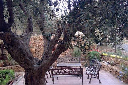 E. Jerusalem home w Beautiful Garden - Room 2