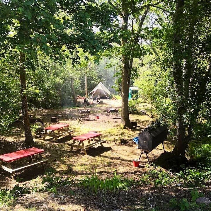 Bell tent in a woodland surround