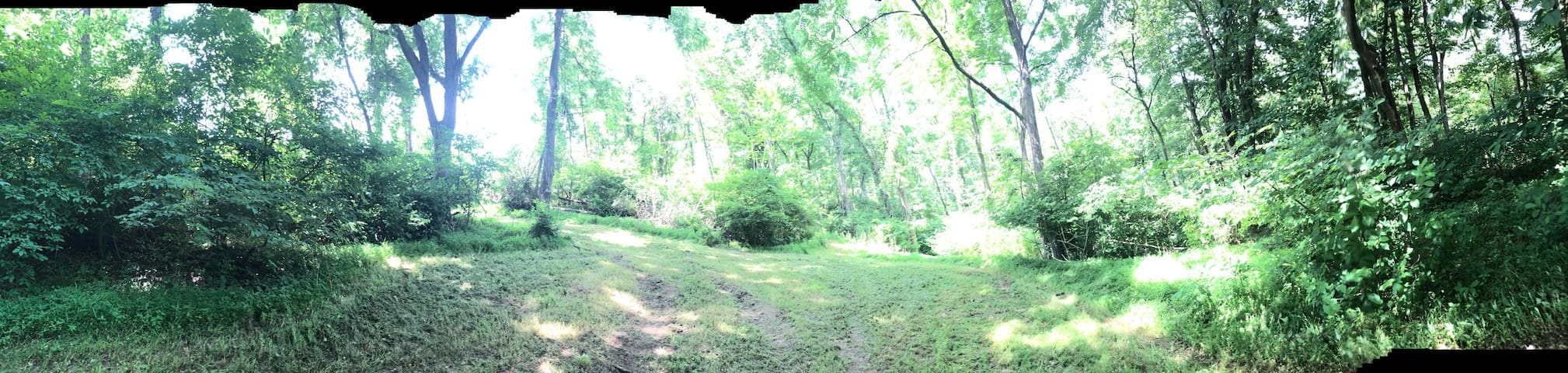Secluded tent campsite In wooded area with trails.