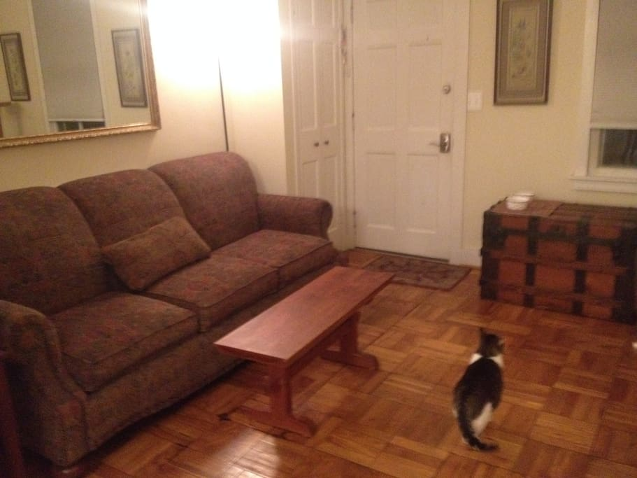 living room & cat