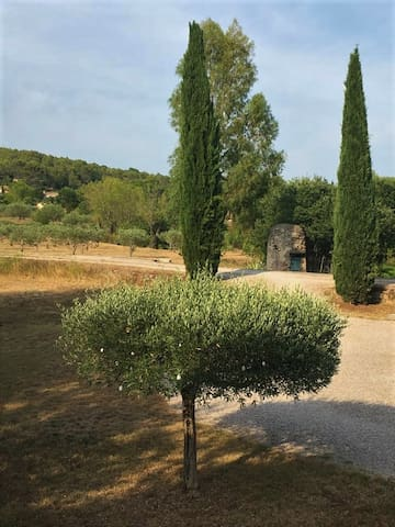 Olive tree in front of the house