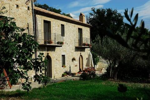 Landsted omgivet af oliventræer