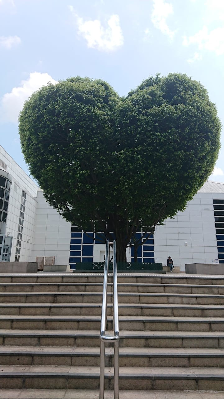 Kowloon Park Heart Tree