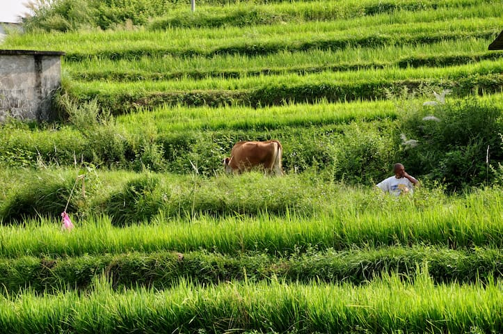 Twin room in the Ricefields