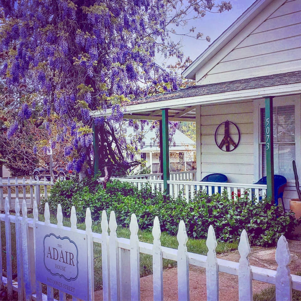 The Historic Adair House has a beautiful wisteria vine that has grown up the historic tree on the corner of 8th street, and is gorgeous when in full bloom!