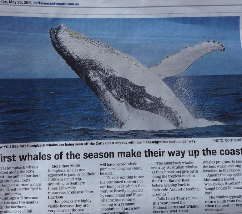 Whale season Mid June to October. Can be spotted from the balcony.