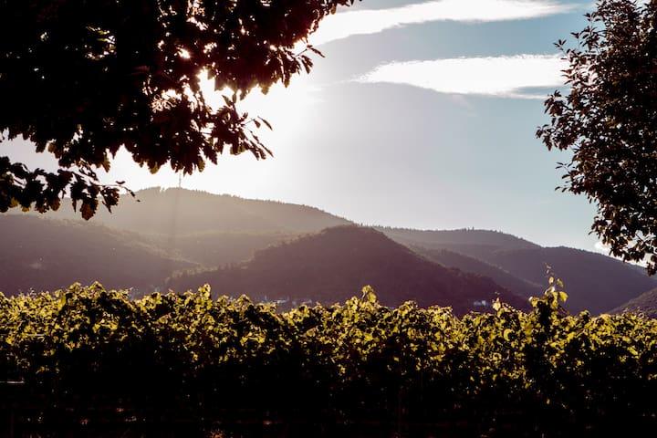 Zwischen Wald und Wein