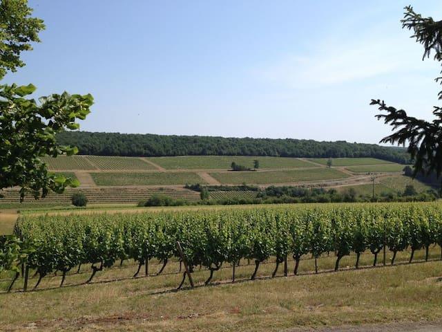 vue panoramique sur les vignes depuis le jardin