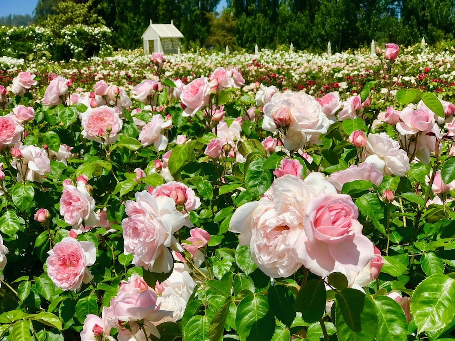 Garden Valley Ranch is a 5 acre rose farm in the heart of West Sonoma County. Our magical garden cottage will inspire you!