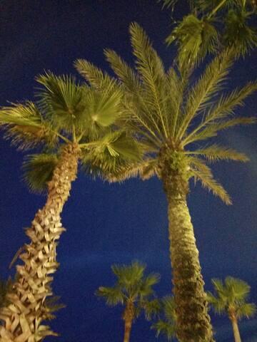 Palms everywhere