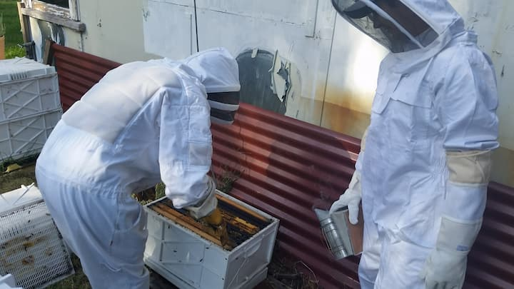 hands on beekeeping class