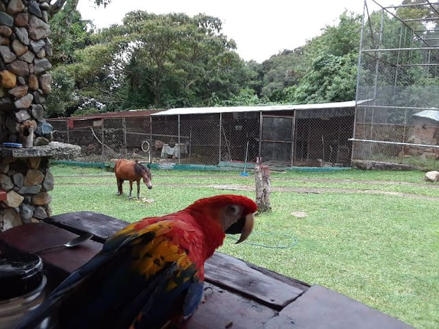 Jungla de Panama wild life rescue and rehab
