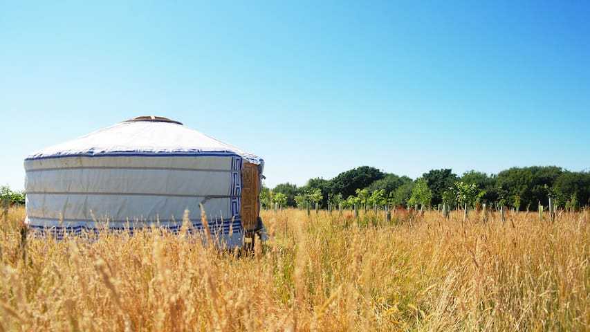 Back to nature yurt stay