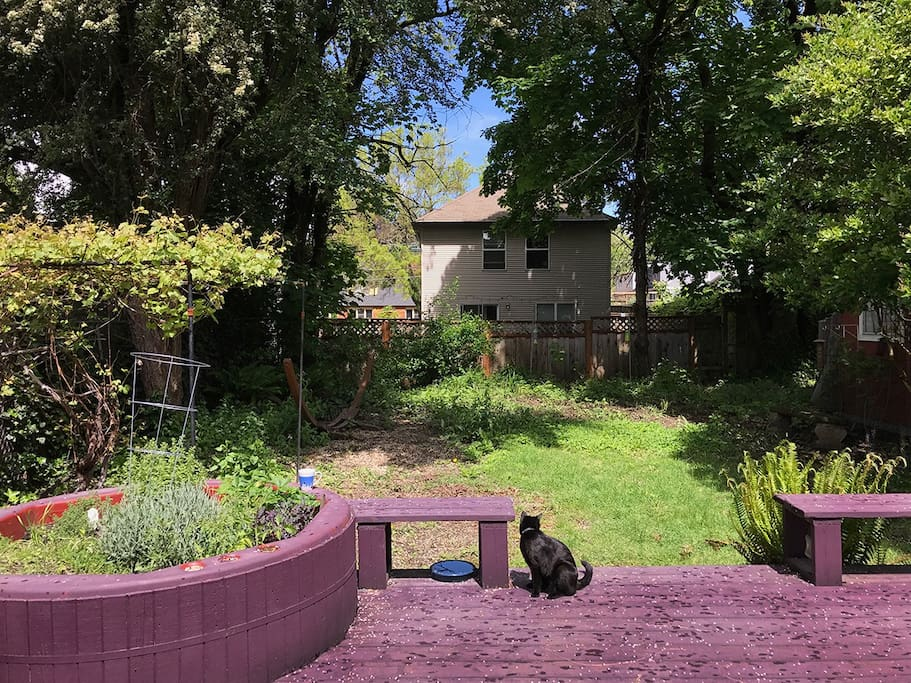 Fabulous back deck and garden (cat not included.)