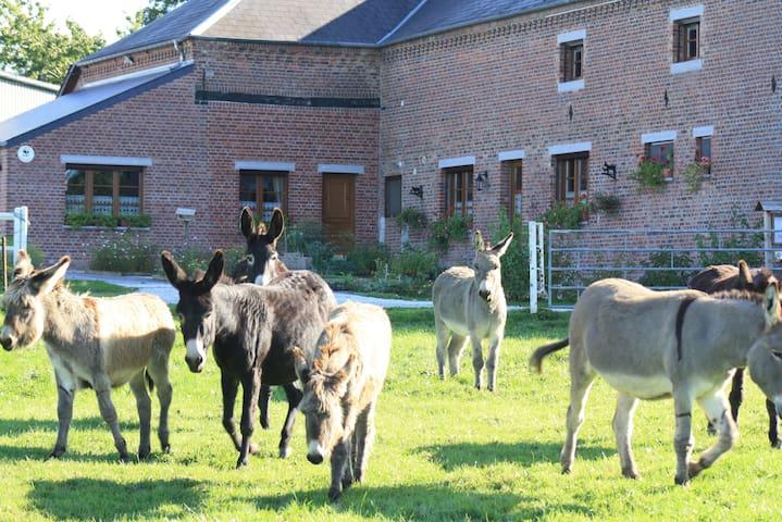 Les Mout'ânes - Saint-Hilaire-sur-Helpe - ที่พักพร้อมอาหารเช้า