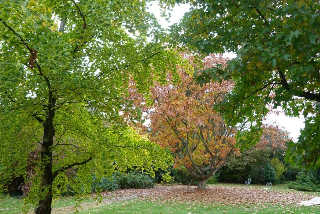 Jardin à l'automne