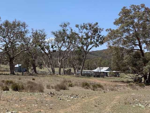 Whispering gums rustic shed campsite