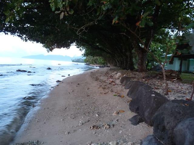 """La plage """"quasi privative"""" et ombragée par les tamanus"""