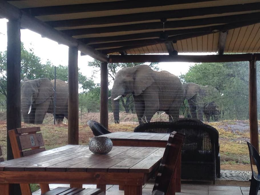 Elephants greeting guests at the lodge