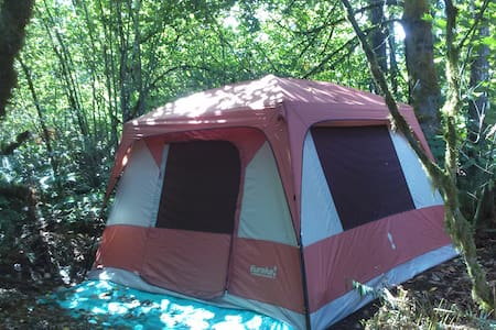 10x10 Tent in the Forest of Kalama - Kalama