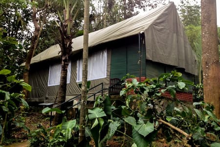 Premium Tent Accommodation in Wayanad - Tält