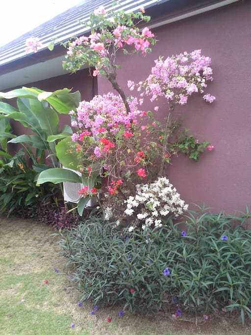 Bougainvillea can be found in every color throughout the villa gardens