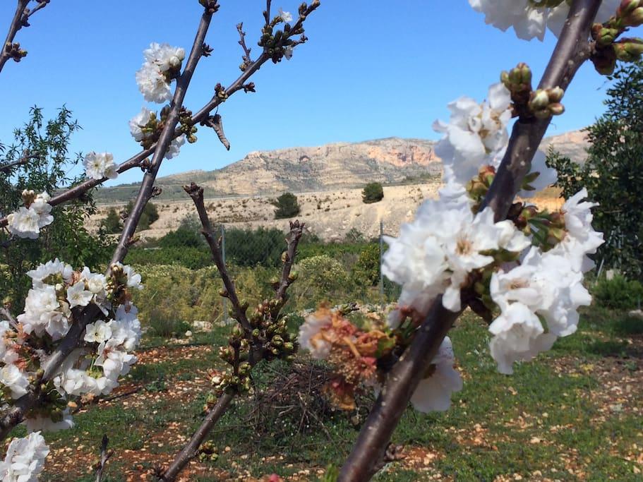 Beautiful view - berg Montgo Denia