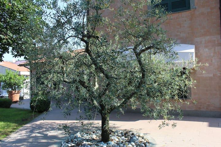 The Olive Tree Italian Style Villa - Selvarella - วิลล่า