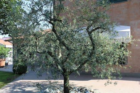 The Olive Tree Italian Style Villa - Selvarella