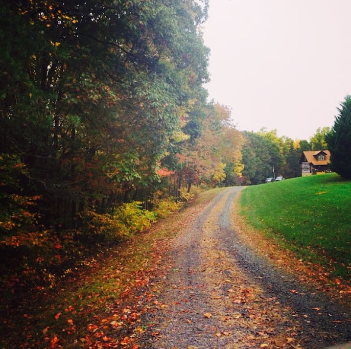 Driveway in the fall